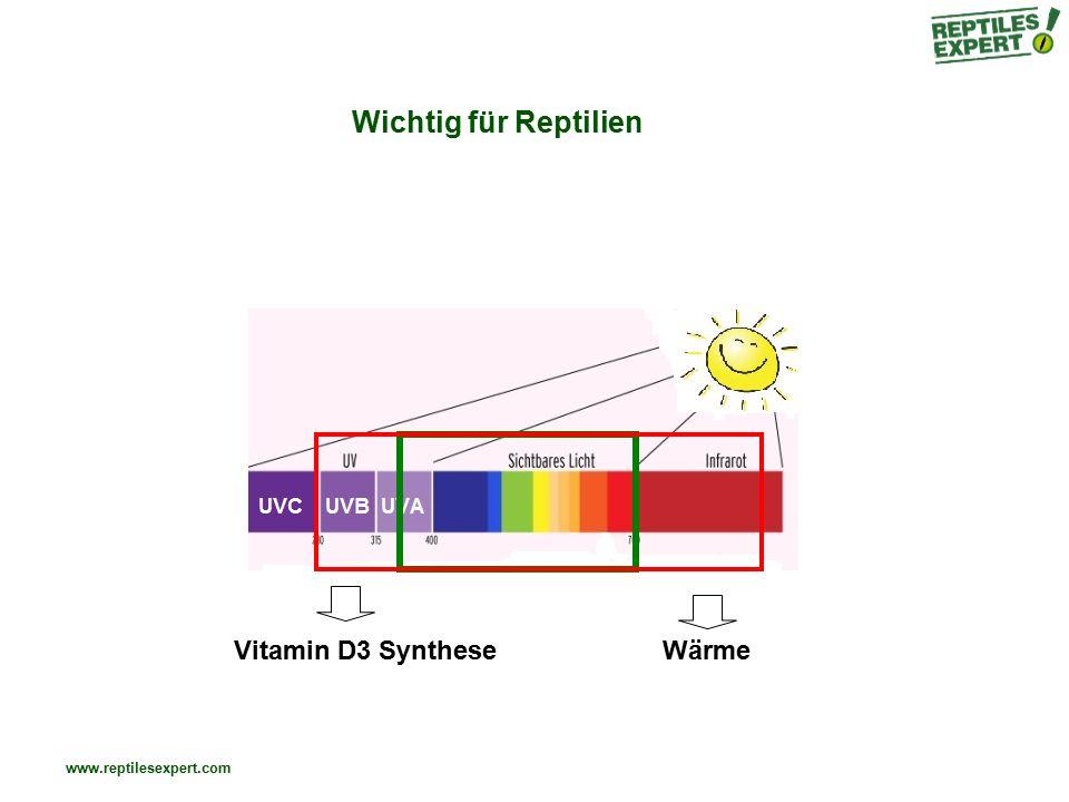 Wichtig für Reptilien Vitamin D3 Synthese Wärme