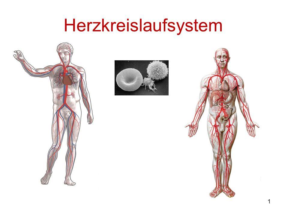 Herzkreislaufsystem