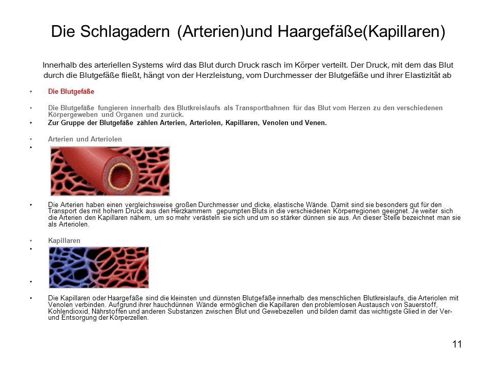 Die Schlagadern (Arterien)und Haargefäße(Kapillaren)