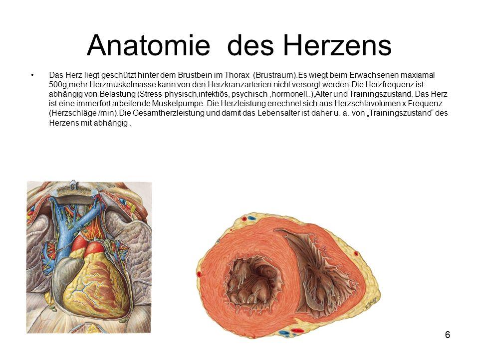 Ziemlich Außen Anatomie Des Herzens Bilder - Menschliche Anatomie ...