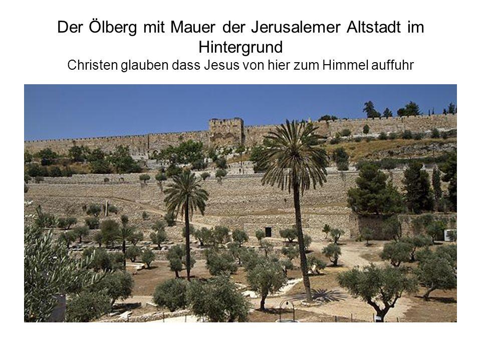 Der Ölberg mit Mauer der Jerusalemer Altstadt im Hintergrund Christen glauben dass Jesus von hier zum Himmel auffuhr