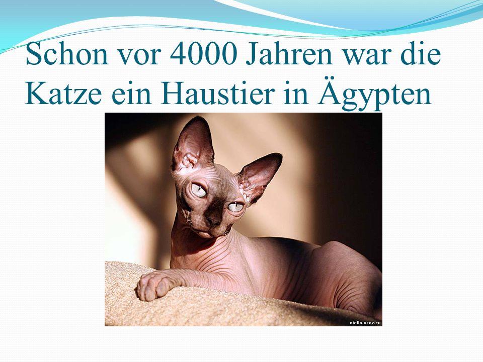 Schon vor 4000 Jahren war die Katze ein Haustier in Ägypten