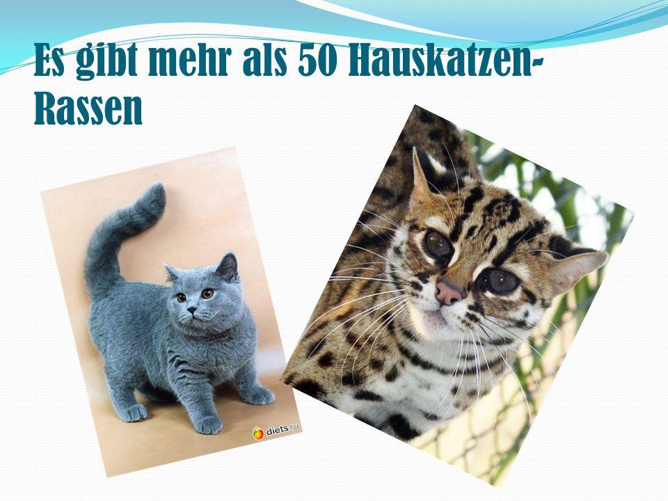 Es gibt mehr als 50 Hauskatzen-Rassen