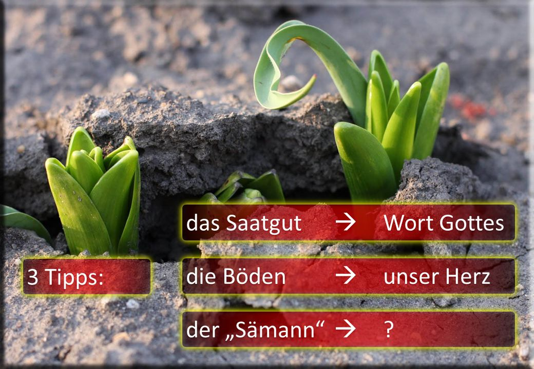 das Saatgut  Wort Gottes