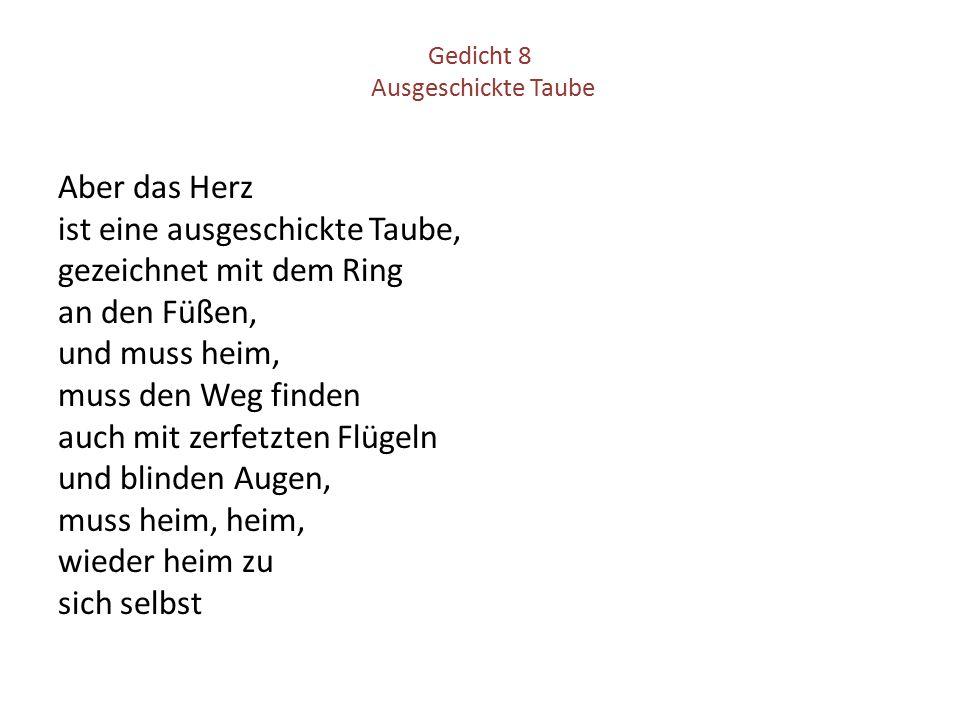Gedicht 8 Ausgeschickte Taube