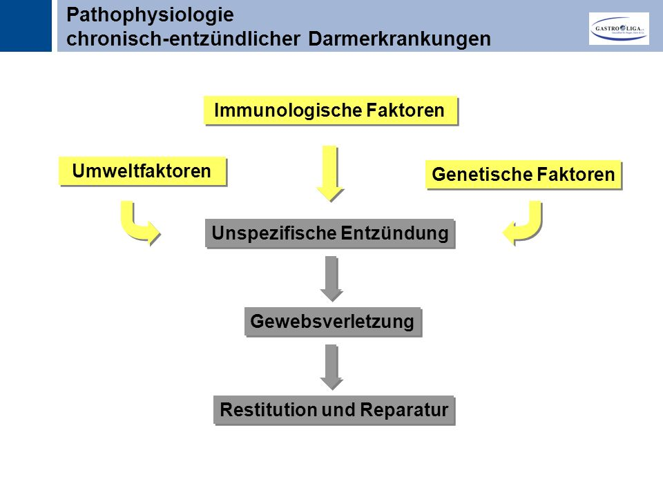 Pathophysiologie chronisch-entzündlicher Darmerkrankungen