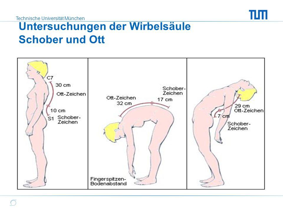 Ausgezeichnet Maisschlange Anatomie Fotos - Anatomie Von ...