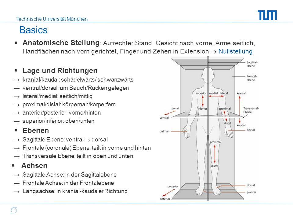Erfreut Anatomie Ebenen Und Achsen Zeitgenössisch - Anatomie Von ...