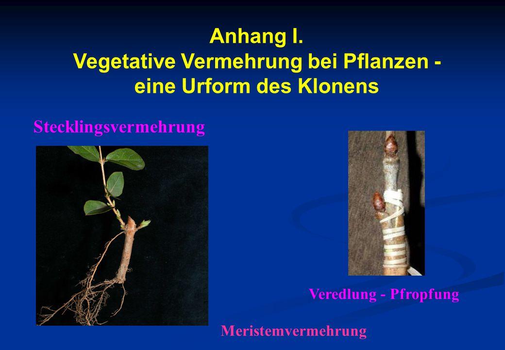Anhang I. Vegetative Vermehrung bei Pflanzen - eine Urform des Klonens