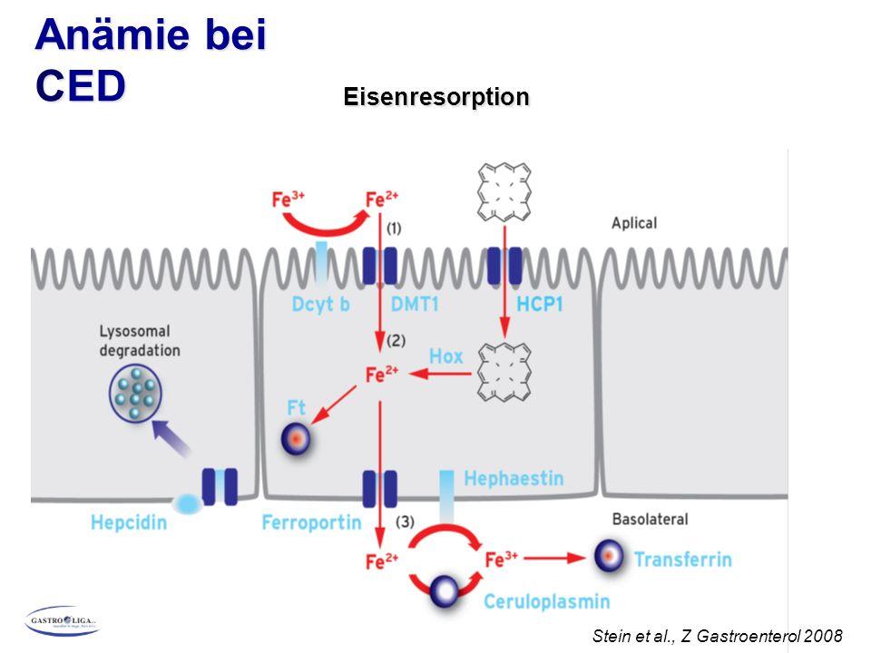 Anämie bei CED Eisenresorption Stein et al., Z Gastroenterol 2008