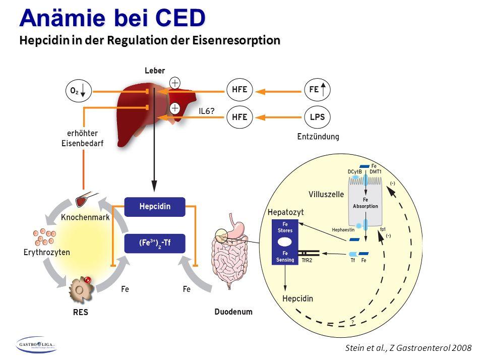 Anämie bei CED Hepcidin in der Regulation der Eisenresorption
