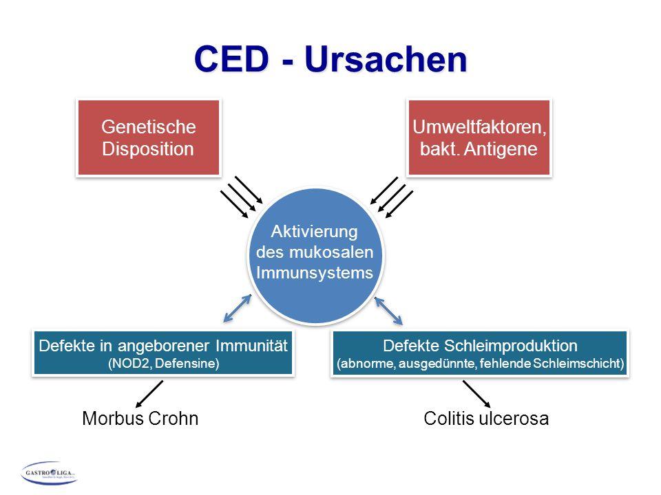 CED - Ursachen Genetische Disposition Umweltfaktoren, bakt. Antigene