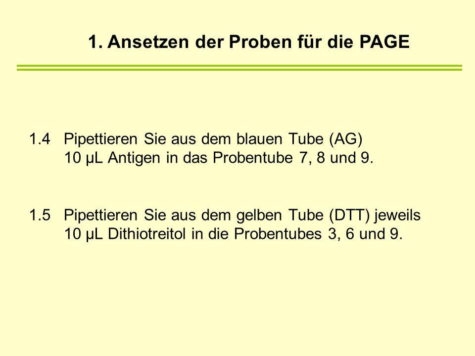 1. Ansetzen der Proben für die PAGE