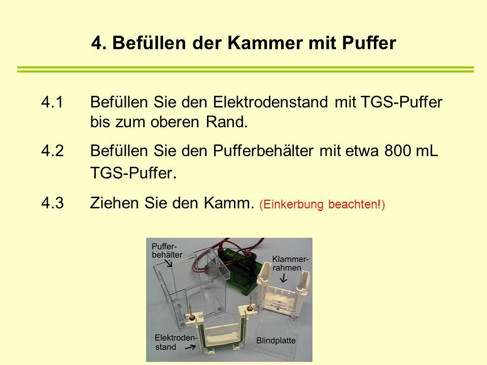 4. Befüllen der Kammer mit Puffer