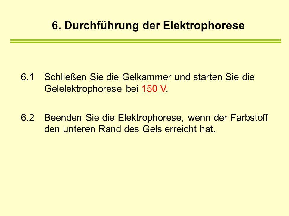 6. Durchführung der Elektrophorese