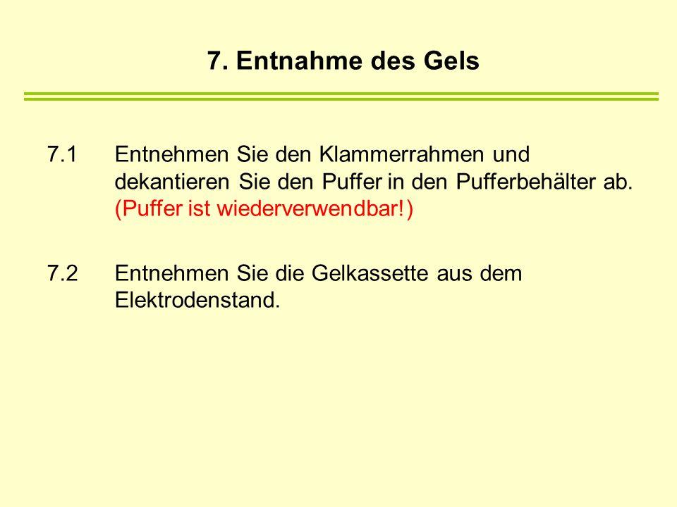 7. Entnahme des Gels 7.1 Entnehmen Sie den Klammerrahmen und dekantieren Sie den Puffer in den Pufferbehälter ab. (Puffer ist wiederverwendbar!)