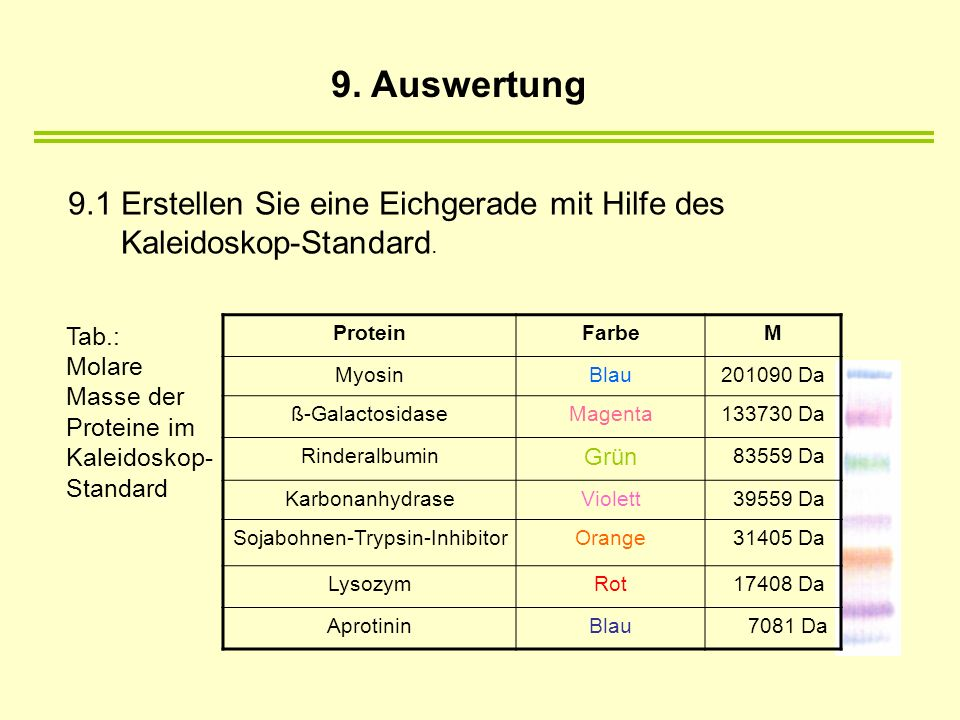 Sojabohnen-Trypsin-Inhibitor