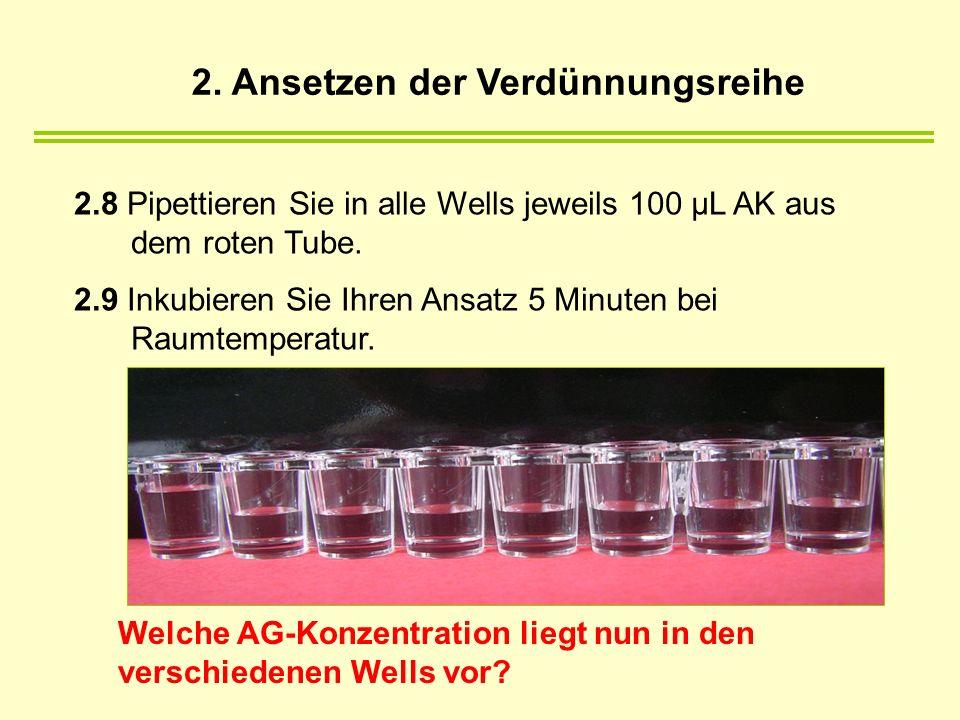 2. Ansetzen der Verdünnungsreihe