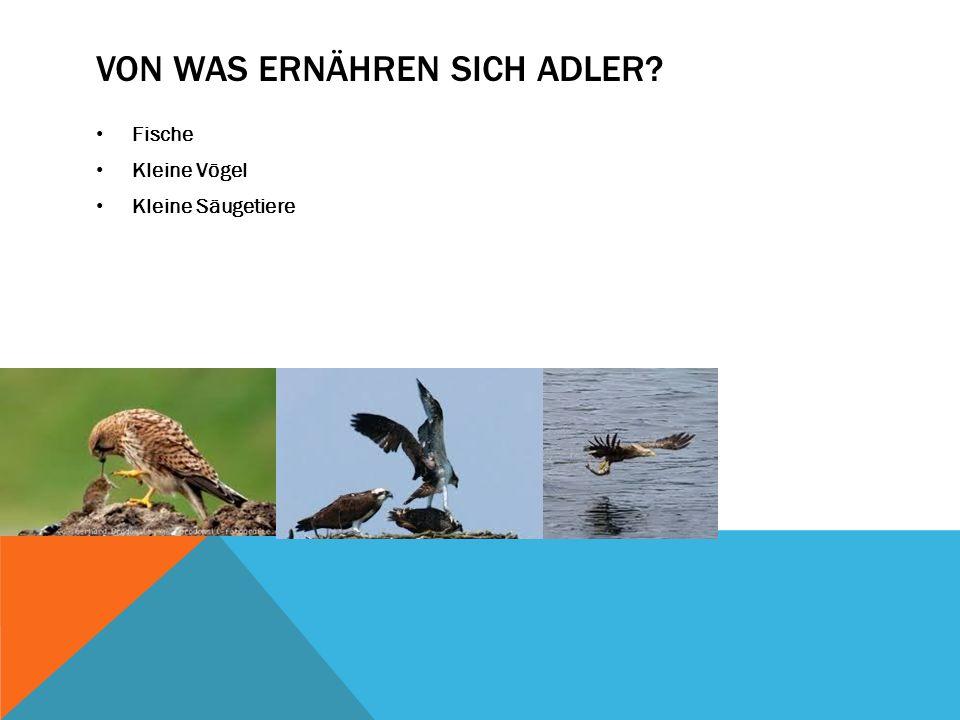 Von was ernähren sich Adler