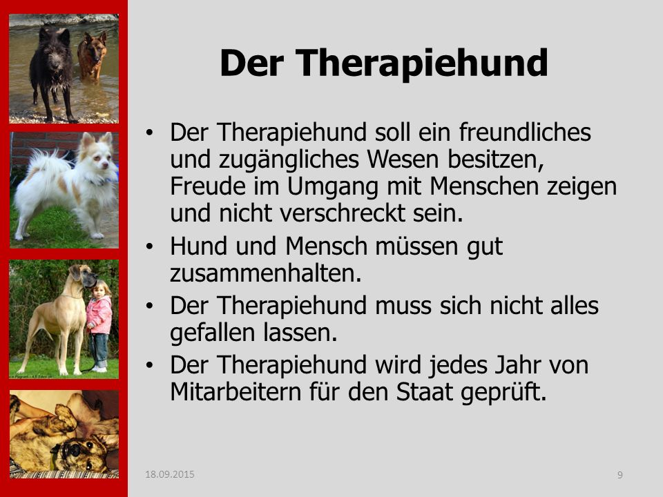 Der Therapiehund
