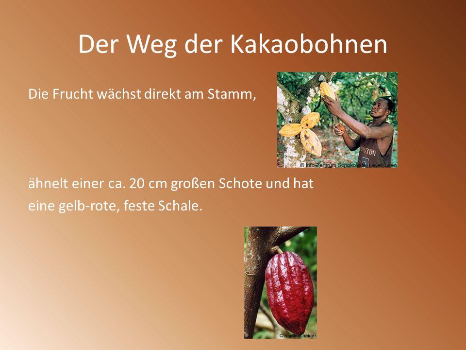 Der Weg der Kakaobohnen