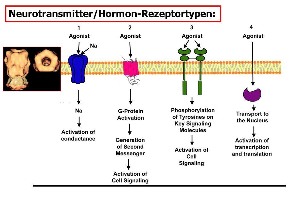 Neurotransmitter/Hormon-Rezeptortypen: