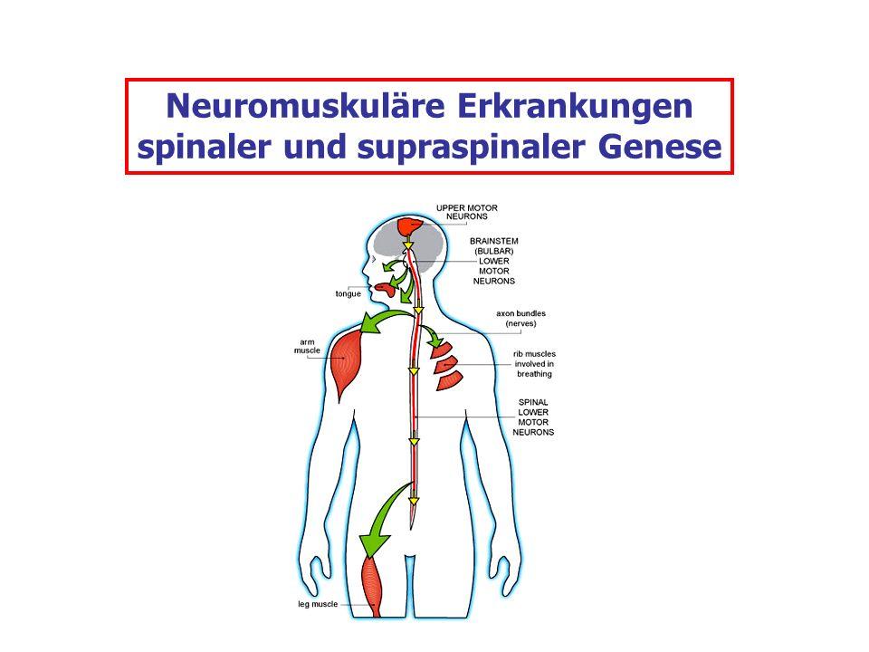 Neuromuskuläre Erkrankungen spinaler und supraspinaler Genese