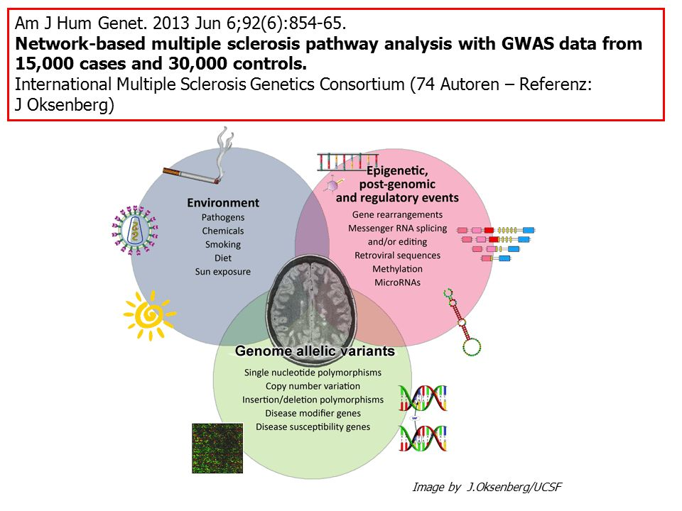 Am J Hum Genet. 2013 Jun 6;92(6):854-65. Network-based multiple sclerosis pathway analysis with GWAS data from 15,000 cases and 30,000 controls.