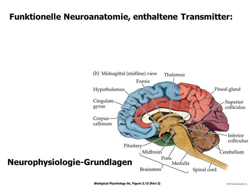 Funktionelle Neuroanatomie, enthaltene Transmitter: