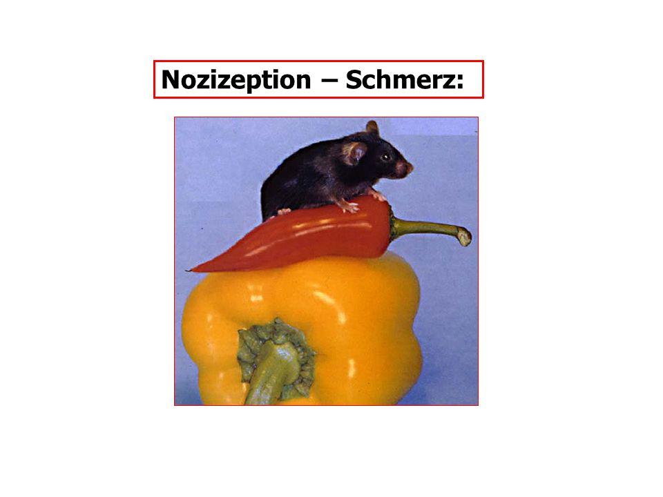 Nozizeption – Schmerz: