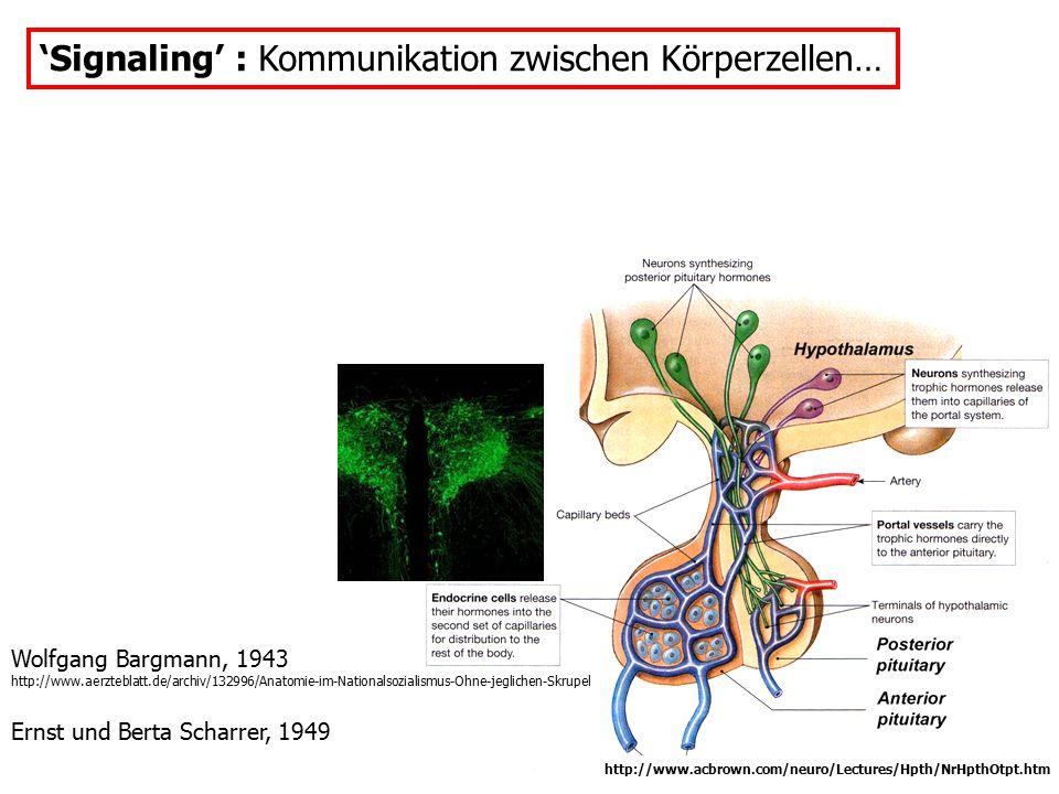 'Signaling' : Kommunikation zwischen Körperzellen…