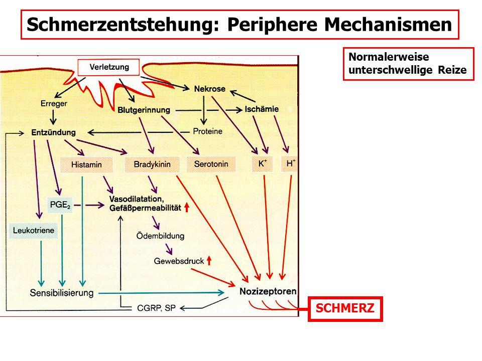 Schmerzentstehung: Periphere Mechanismen