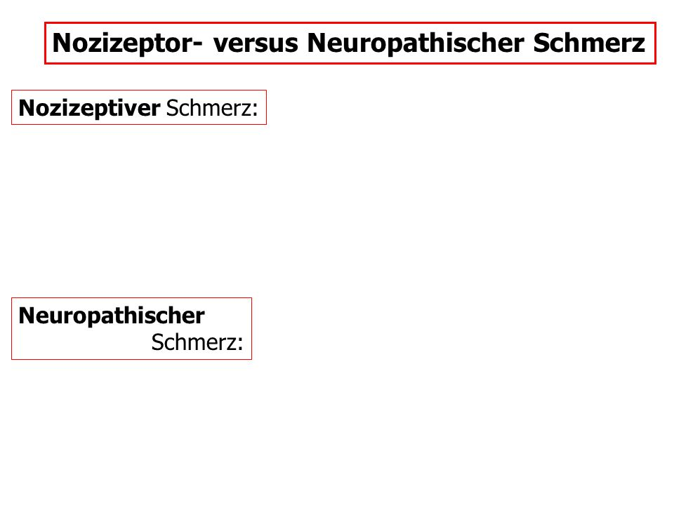 Nozizeptor- versus Neuropathischer Schmerz