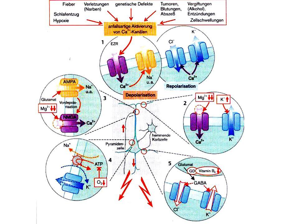 NMDA: Ca permeael, normalerweise von Mg blockiert