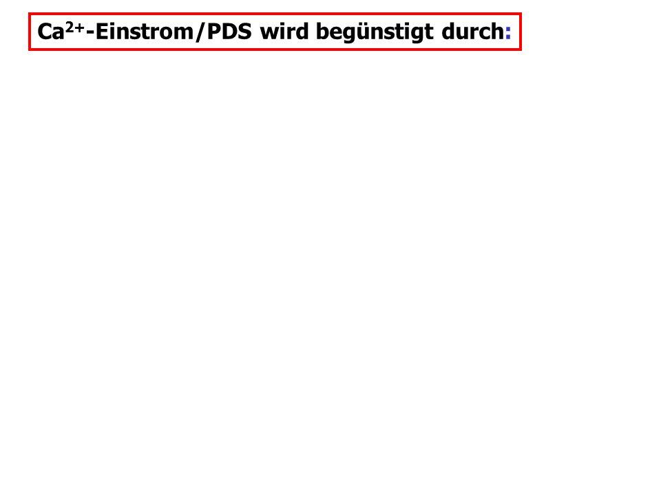 Ca2+-Einstrom/PDS wird begünstigt durch: