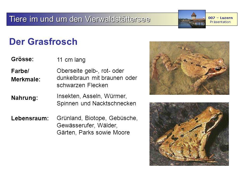 Der Grasfrosch Tiere im und um den Vierwaldstättersee Grösse: