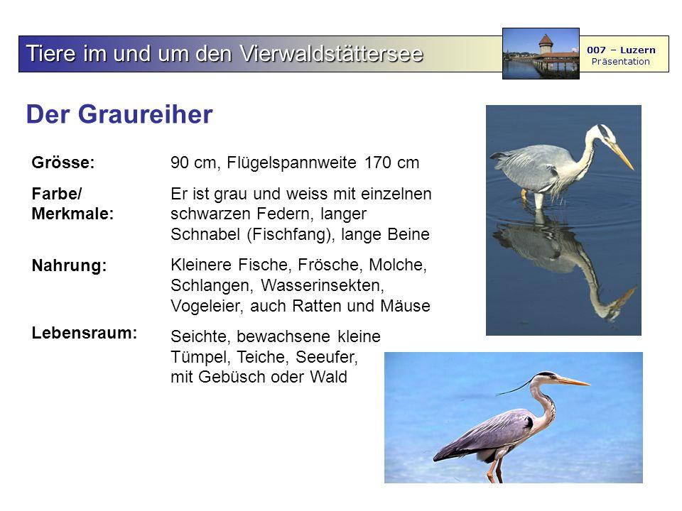 Der Graureiher Tiere im und um den Vierwaldstättersee Grösse: Farbe/