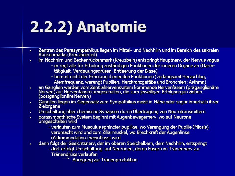 2.2.2) Anatomie Zentren des Parasympathikus liegen im Mittel- und Nachhirn und im Bereich des sakralen Rückenmarks (Kreuzbeinteil)