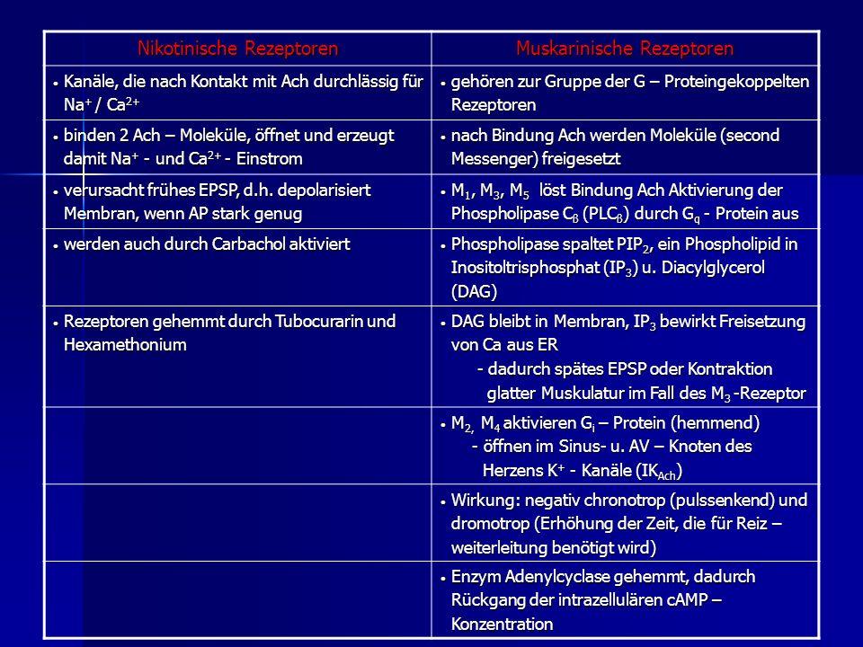 Nikotinische Rezeptoren Muskarinische Rezeptoren