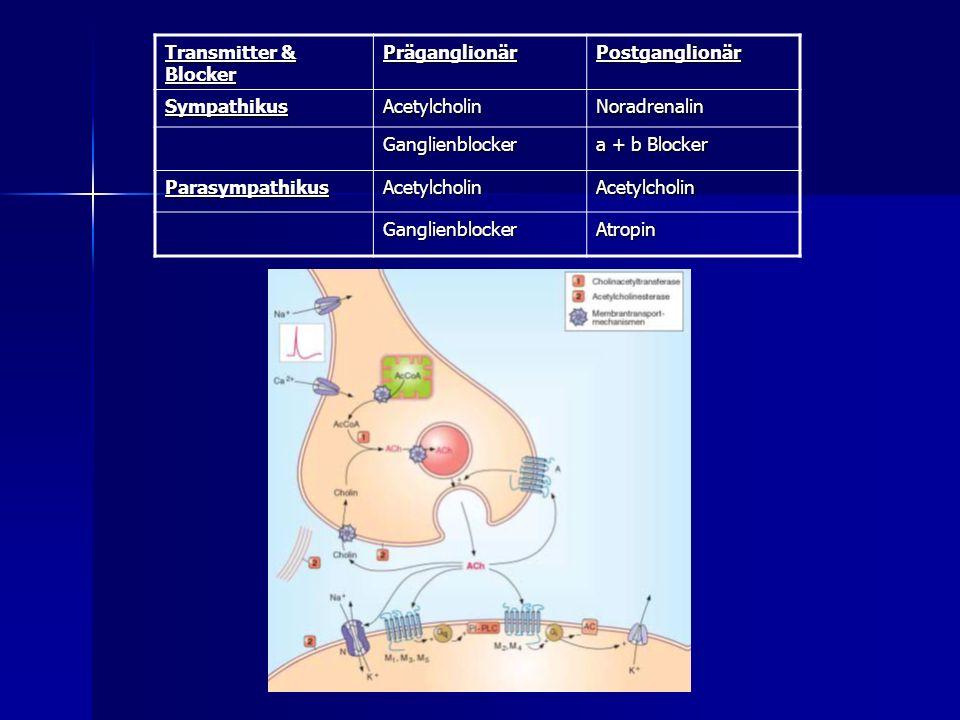 Transmitter & Blocker Präganglionär. Postganglionär. Sympathikus. Acetylcholin. Noradrenalin. Ganglienblocker.