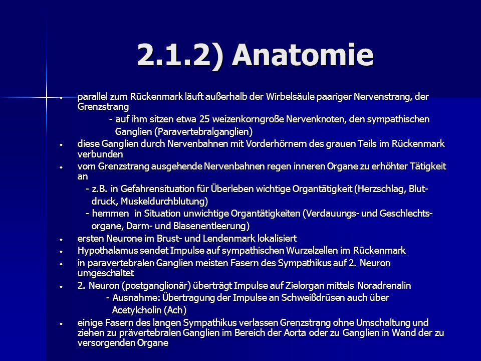 2.1.2) Anatomie parallel zum Rückenmark läuft außerhalb der Wirbelsäule paariger Nervenstrang, der Grenzstrang.