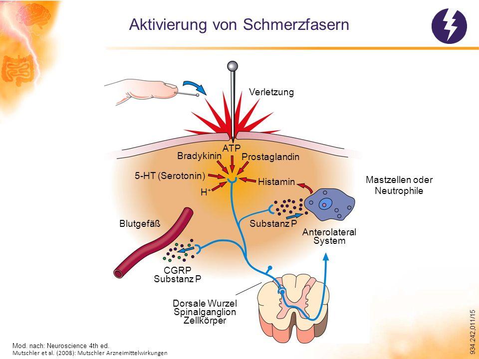 Aktivierung von Schmerzfasern