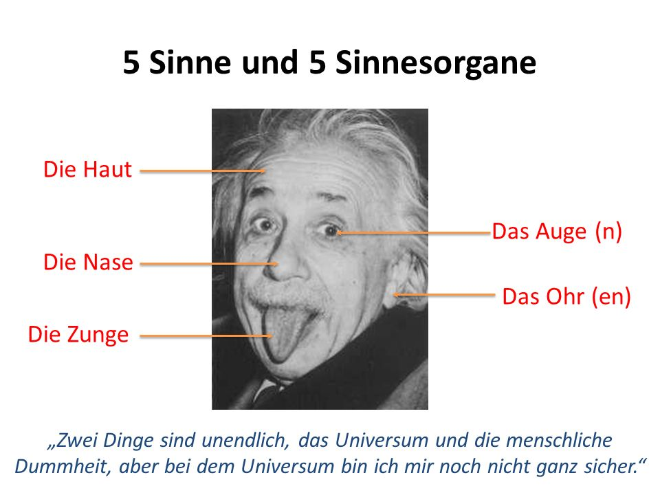 5 Sinne und 5 Sinnesorgane