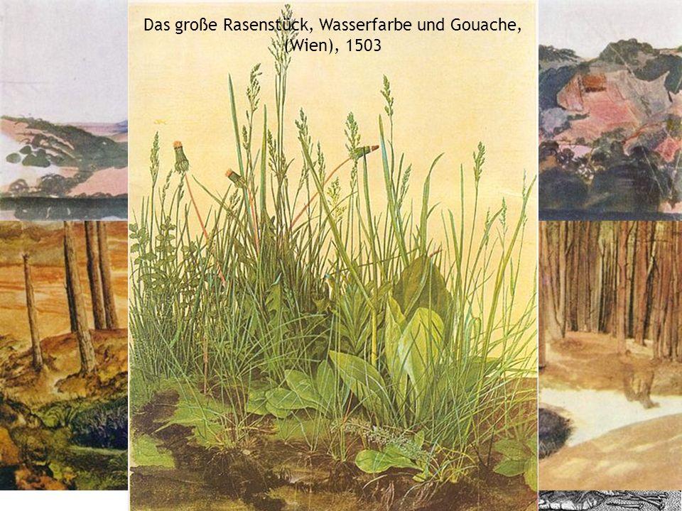 Das große Rasenstück, Wasserfarbe und Gouache, (Wien), 1503