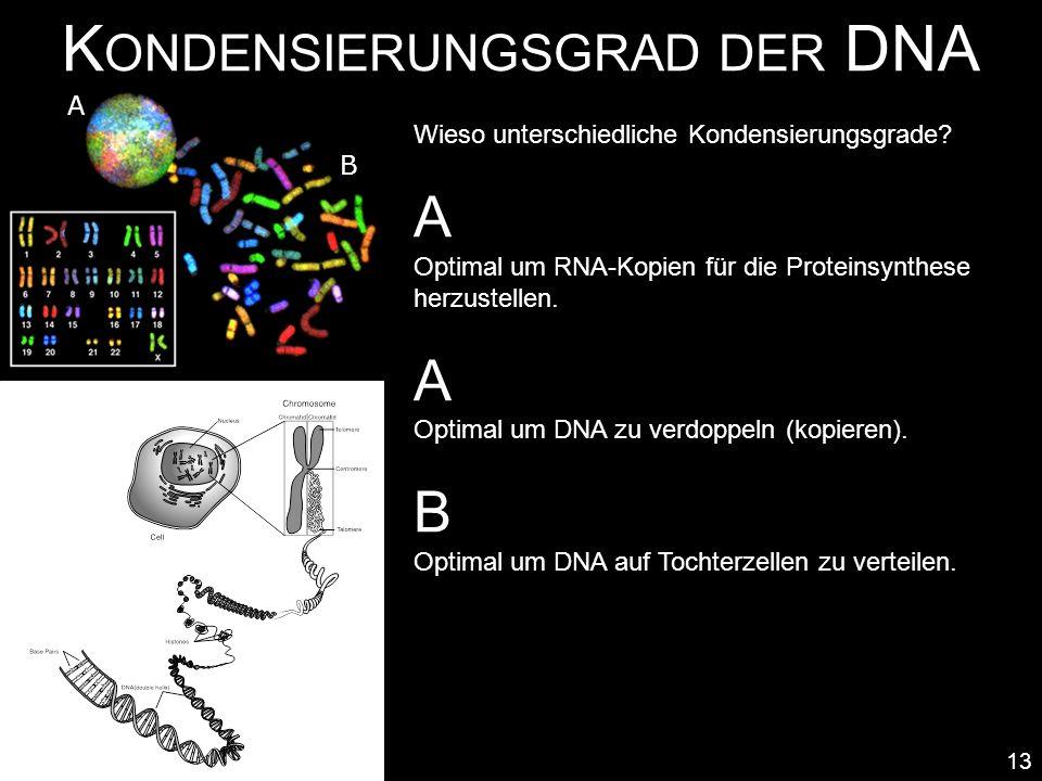 Kondensierungsgrad der DNA