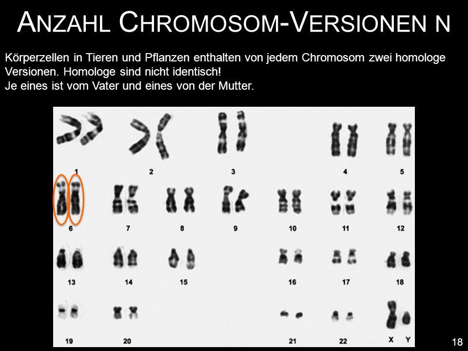 Anzahl Chromosom-Versionen n