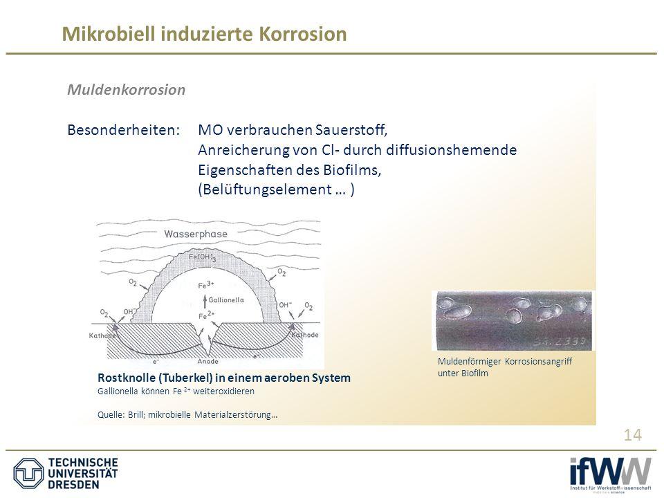 Mikrobiell induzierte Korrosion