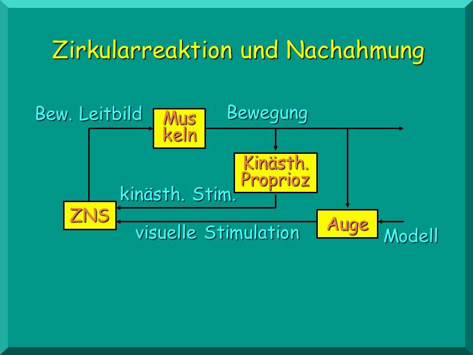 Zirkularreaktion und Nachahmung