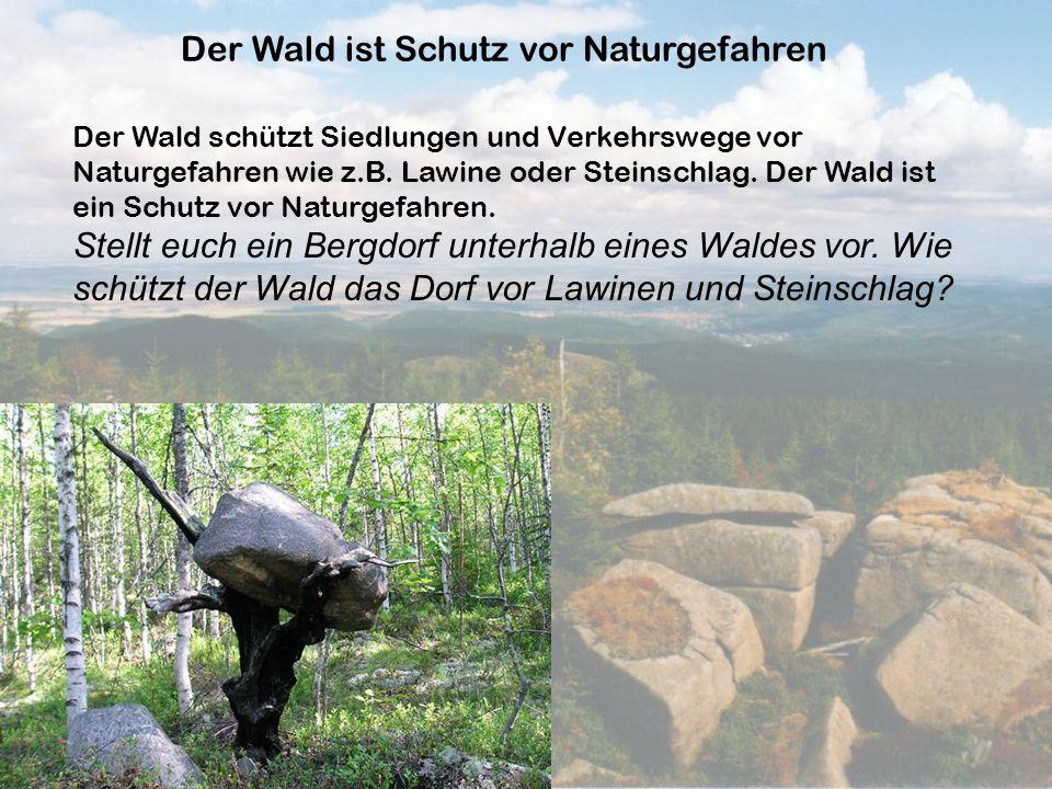 Der Wald ist Schutz vor Naturgefahren