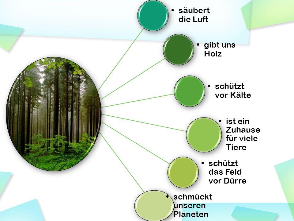 säubert die Luft gibt uns Holz. schützt vor Kälte. ist ein Zuhause für viele Tiere. schützt das Feld vor Dürre.
